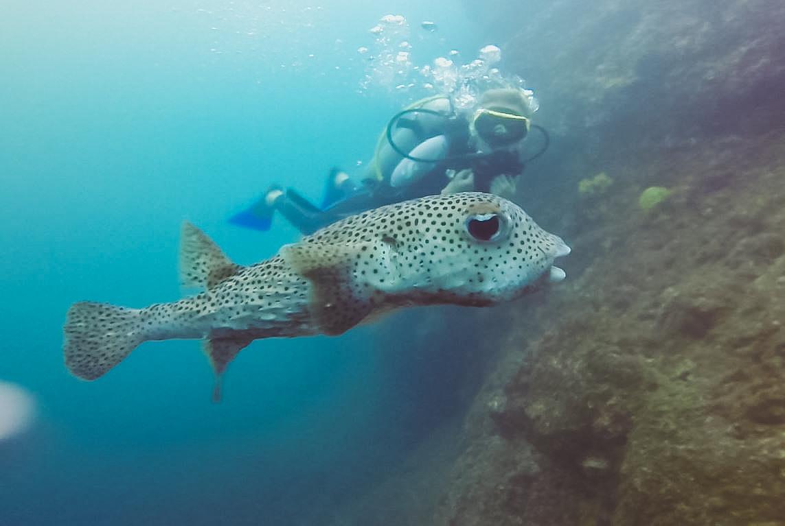 panama_diving (1 von 1)-3