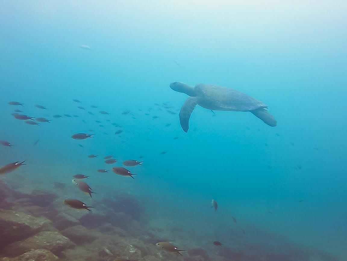 panama_diving (1 von 1)